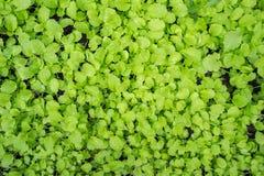 Fundo fresco das plantas verdes Imagens de Stock