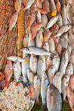 Fundo fresco do marisco Imagens de Stock