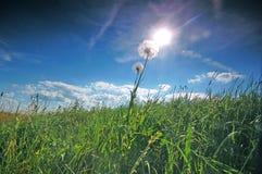 Fundo fresco do prado Foto de Stock Royalty Free