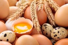 Fundo fresco dos ovos Imagens de Stock