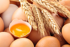 Fundo fresco dos ovos Foto de Stock Royalty Free