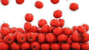 Fundo fresco dos tomates Conceito do alimento rendição 3d Fotos de Stock