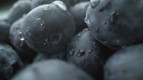 Fundo fresco molhado da uva-do-monte tiro do macro do est?dio video estoque
