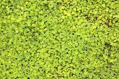Fundo frondoso das plantas verdes Imagem de Stock Royalty Free