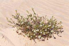 Fundo grande da areia com ondas e plantas Imagem de Stock Royalty Free