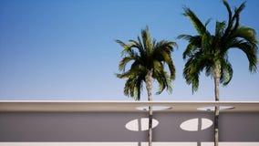 Fundo grande de duas palmeiras o c?u ensolarado azul vídeos de arquivo