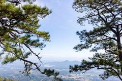 Fundo grande do céu do por do sol da silhueta da árvore Imagem de Stock Royalty Free