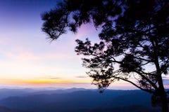 Fundo grande do céu do por do sol da silhueta da árvore Fotografia de Stock Royalty Free
