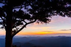Fundo grande do céu do por do sol da silhueta da árvore Fotos de Stock Royalty Free