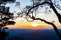 Fundo grande do céu do por do sol da silhueta da árvore Imagem de Stock