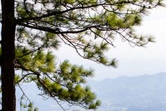 Fundo grande do céu do por do sol da silhueta da árvore Fotografia de Stock