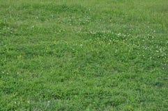 Fundo horizontal da grama e das flores fotos de stock royalty free