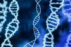 Fundo humano da hélice do ADN Imagem de Stock Royalty Free