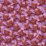 Fundo infinito sem emenda floral O vermelho floresce o lírio para o projeto e a impressão Fundo de flores naturais foto de stock