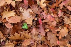 Fundo inoperante das folhas foto de stock