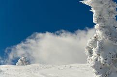 Fundo invernal Foto de Stock Royalty Free