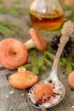 Fundo leitoso coral do cogumelo do tampão foto de stock royalty free
