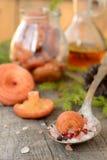 Fundo leitoso coral do cogumelo do tampão fotografia de stock royalty free