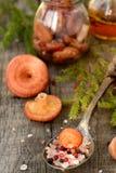 Fundo leitoso coral do cogumelo do tampão imagem de stock