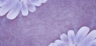 Fundo lilás de Angelic Feather Double Corner fotos de stock royalty free