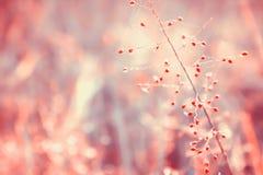 Fundo macio da natureza do foco da flor da grama da cor pastel Imagens de Stock Royalty Free