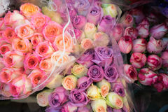 Fundo macio das rosas da cor Imagens de Stock