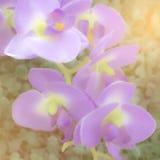 Fundo macio do sumário da cor da flor Tons pasteis Fotografia de Stock Royalty Free