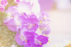Fundo macio do sumário da cor da flor Tons pasteis Foto de Stock Royalty Free