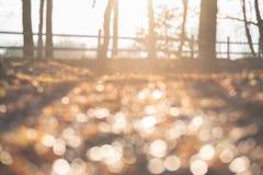 Fundo macio e unfocused abstrato do projeto com espaço da cópia para o texto Fundo mágico da floresta do outono com efeito natura foto de stock royalty free