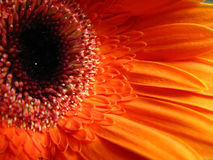 Fundo macro da flora Imagens de Stock Royalty Free