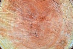 Fundo. madeira. Seção transversal do tronco (vista superior). Fotografia de Stock