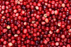Fundo maduro vermelho dos arandos Bagas do foxberry da airela Imagens de Stock Royalty Free