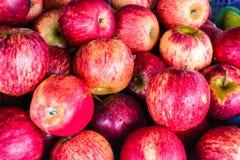 Fundo maduro vermelho fresco das maçãs Foto de Stock