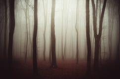 Fundo misterioso da floresta com névoa Imagens de Stock