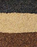 Fundo misturado das sementes de sésamo Foto de Stock Royalty Free