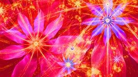 Fundo moderno vívido brilhante bonito da flor em cores cor-de-rosa, vermelhas, roxas, amarelas Fotografia de Stock