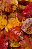 Fundo molhado das folhas de outono Fotografia de Stock Royalty Free