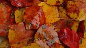 Fundo molhado das folhas de outono Imagens de Stock Royalty Free