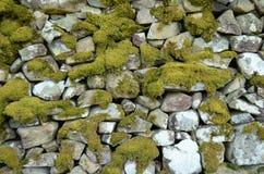 Fundo Mossy da parede Imagem de Stock