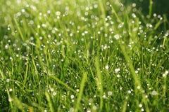 Fundo natural abstrato das gramas verdes Fotografia de Stock