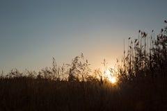 Fundo natural Alvorecer e céu azul no campo O sol aumenta sobre o horizonte em um fundo da grama fotos de stock royalty free