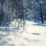 Fundo natural com os ramos graciosos do vidoeiro cobertos com o sh Foto de Stock Royalty Free