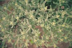 Fundo natural da artemísia A grama do outono do estepe tonificou em cores verdes e azuis Imagem de Stock Royalty Free
