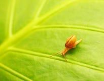 Fundo natural da folha verde Imagens de Stock