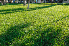 Fundo natural de grama verde Imagem de Stock