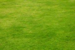 Fundo natural de grama verde imagens de stock royalty free