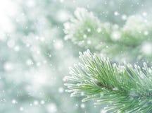 Fundo natural do inverno foto de stock