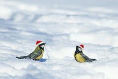 Fundo natural do inverno com os melharucos engraçados bonitos dos pássaros no th imagem de stock