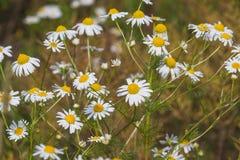Fundo natural do verão Imagens de Stock