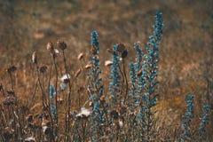 Fundo natural em tons alaranjados com grama seca e flores Imagens de Stock Royalty Free